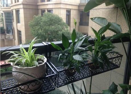 欧式铁艺阳台花架 室内栏杆多盆花架